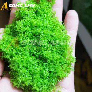 Bột cây mô hình xanh lá sáng loại xốp HH02-BAQSSGRN02
